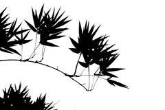 Illustration en bambou Photo libre de droits