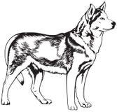Illustration enrouée de vecteur de race de chien Image stock