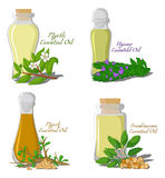 Illustration of essential oils. Part 3. A set of essential oils: Myrtle, Hyssop, Myrrh, Frankincense Royalty Free Stock Photo