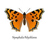 Illustration of European Swallowtail Butterfly - Nymphalis Polyc Stock Photos