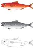 Illustration exotique de vecteur de poissons Images libres de droits