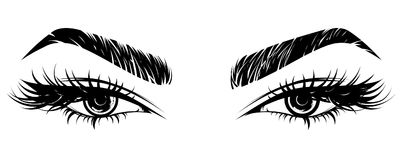 Illustration of eye makeup and brow on white background. Illustration  of beautiful eye makeup and brow on white background Stock Photo