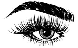 Illustration of eye makeup and brow on white background Stock Photography