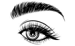 Illustration of eye makeup and brow on white background Stock Photos