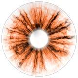 Illustration of eye negative, orange iris, light reflection. Middle size of eyes. Stock Photos