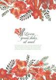 Illustration för designbeståndsdelinbjudan med den röda kamsisblomman på vit bakgrund vektor illustrationer