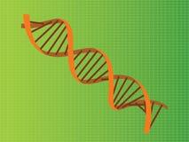 Illustration för Dna-trådapelsin Arkivfoton
