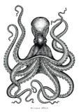 Illustration för gravyr för tappning för bläckfiskhandteckning på vitbac stock illustrationer