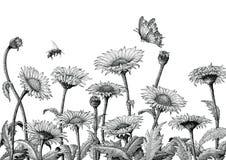 Illustration för gravyr för teckning för tusenskönafälthand som isoleras på whit royaltyfri illustrationer