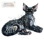 Illustration för husdjur för hem för Devon Rex kattvattenfärg Katter föder upp serier Tamdjur royaltyfri illustrationer