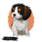 Illustration för konst för stolt spanielvalp för konung Charles digital Arkivfoton