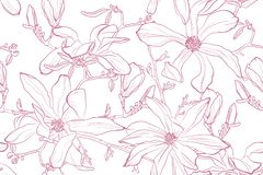 Illustration för magnoliablommavektor Den sömlösa modellen med rosa färger blommar på en vit bakgrund vektor illustrationer
