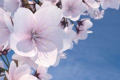 Illustration för makro 3D av Cherry Blossom Tree Royaltyfria Bilder