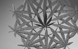 Illustration för marijuana 3d Blad i en cirkel av små sidor På grå bakgrund med obetydlig karaktärsteckning svart white vektor illustrationer