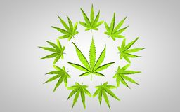 Illustration för marijuana 3d Stort blad i en cirkel av små sidor På grå bakgrund med obetydlig karaktärsteckning royaltyfri illustrationer