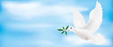 Illustration för rengöringsdukbaner 3d med duvan och olivgrön filial med himmelbakgrund vektor illustrationer