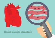 Illustration för struktur för hjärtamuskel Illustration av det hjärt- silkespappret Arkivbild