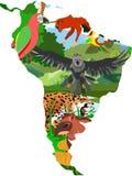 Illustration för Sydamerika begreppsvektor, djurliv, fauna, djur vektor illustrationer