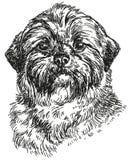 Illustration för teckning för Shih Tzu vektorhand Arkivbilder
