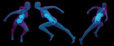 illustration för tolkning 3D av digestivkexsystemet Arkivfoto
