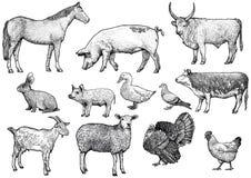 Illustration för uppsättning för lantgårddjur, teckning, gravyr, linje konst som är realistisk Stock Illustrationer