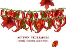 Illustration för vektor för bakgrund för peppar för höstgrönsakchili realistisk Royaltyfri Bild