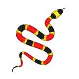 Illustration för vektor 3d av Coral Snake eller micrurusen som isoleras på vit Royaltyfri Fotografi