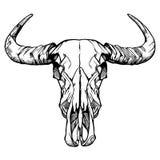 Illustration för vektor för buffelskalle som hand dragen isoleras på vit också vektor för coreldrawillustration Arkivfoton