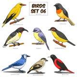 Illustration för vektor för fastställd tecknad film för fågel färgrik Arkivfoton
