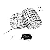 Illustration för vektor för havremajskolv hand dragen Isolerat grönsak inristat stilobjekt Detaljerad vegetarisk matteckning royaltyfri illustrationer