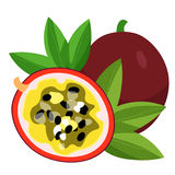 Illustration för vektor för maracuya för tropisk frukt för passionblommablått Royaltyfri Foto