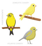 Illustration för vektor för tecknad film för fågelkanariefågeluppsättning Arkivbilder