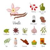 Illustration för vektor för grönsak för smaktillsats för njutning för kryddasmaktillsatser och för smaktillsatsmatörter dekorativ royaltyfri illustrationer