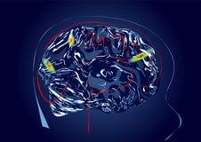 Illustration för vektor för hjärnbildläsning