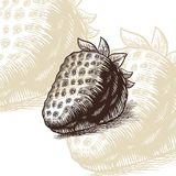 Illustration för vektor för jordgubbeattraktiongravyr Royaltyfri Bild