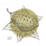 Illustration för vektor för kakaobönor Inristad tappningstilillustration Chokladkakaobönor Logomall Arkivbilder
