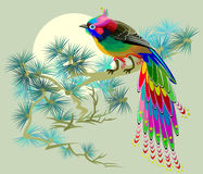Illustration of fairyland little bird sitting on a branch of pine. Royalty Free Stock Photography