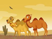 Family of camels. Illustration of family of camels in the desert Stock Image