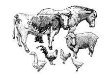 Illustration of farm animals Stock Photography