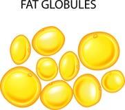 Illustration of fat globules vector illustration