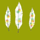 Illustration of feathers with  ornaments - in color. Illustration of feathers with tribal ornaments - in color Stock Images