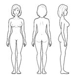 4 Illustration of female figure. Vector illustration of female figure - front, back and side view in outline Stock Image