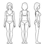 Illustration of female figure. Vector illustration of a female figure - front, rear and side view in underwear Royalty Free Stock Photos
