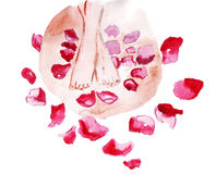 Illustration of female legs on spa treatments in rose petals Stock Images