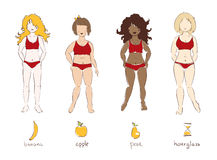 Illustration - female types of figures. Funny vector illustration - female types of figuresn Stock Photography