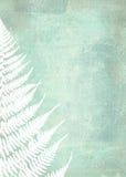 Illustration of fern leaves on shabby background. Foliage design Stock Photo