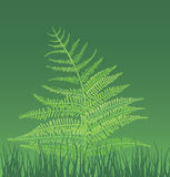 Illustration of fern-plant. Vector illustration of fern-plant and green grass Royalty Free Stock Image