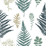 Illustration of fern seamless pattern Stock Photography