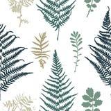 Illustration of fern seamless pattern. Vector illustration of fern seamless pattern Stock Photography