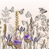 Illustration with field flowers and butterflies in vintage style. Floral illustration with field flowers and butterflies in vintage style Royalty Free Stock Image